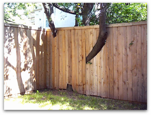 Friday's Fence – What went wrong here…