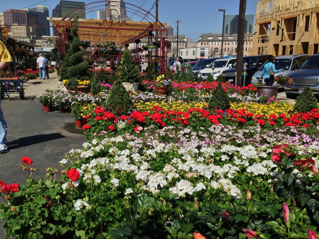 Dallas Farmers Market In Bloom